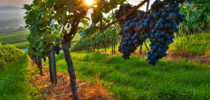 Zeolite effects when solving low precipitations in vinery